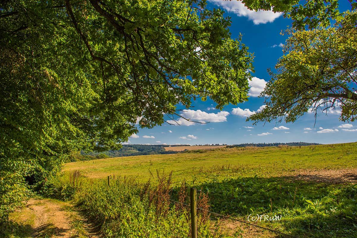 wacholder_ginster_-pilgerpfade-bei-st_-jost-167