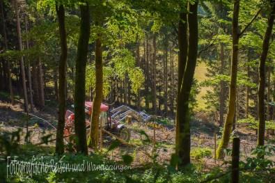 Im Wald wird geschuftet