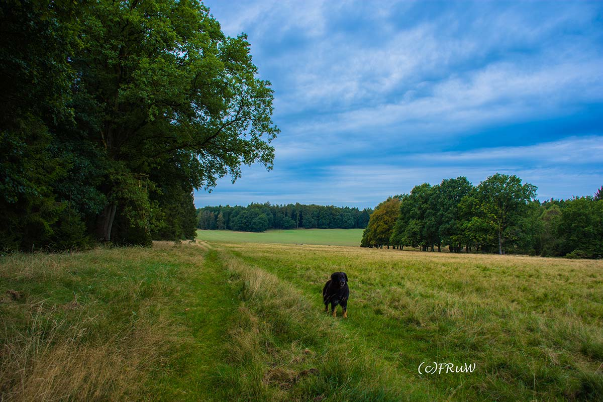wilsederberg_wilseden_und_campreinsehlen-16