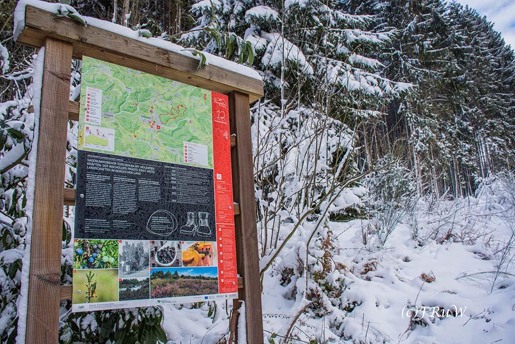 bergischerstreifzugwacholderweg-4
