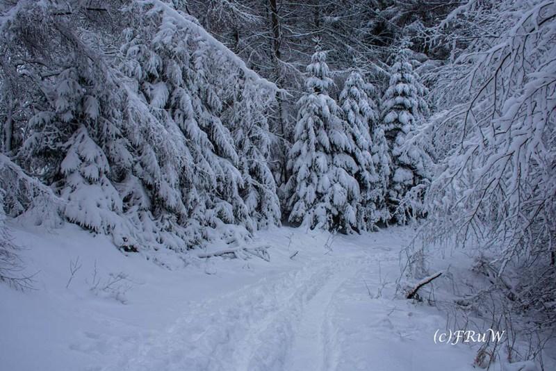 bergischerstreifzugwacholderweg-60