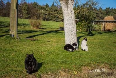 Wach- Katzen