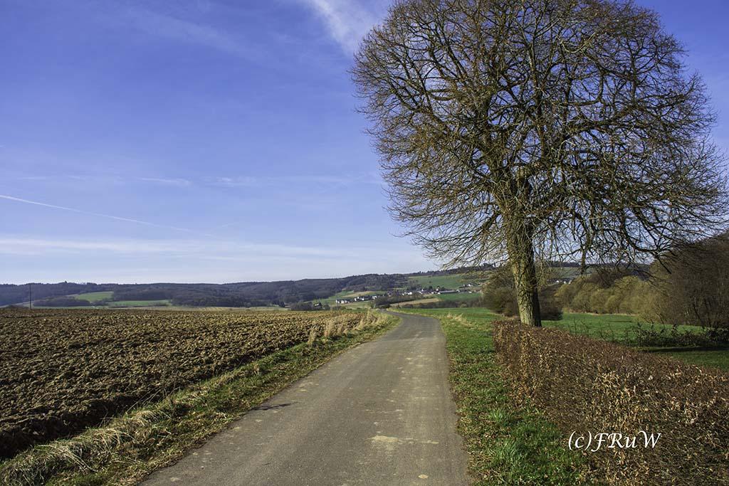 Müllenbach_Meisenthal (5)