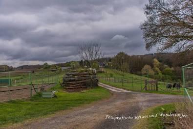 Straußenfarm-Emminghausen-(26)-Bearbeitet