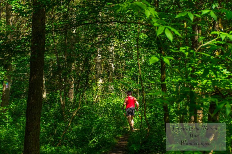 Durch den Wald auf dem Saar-Hunsrück Steig