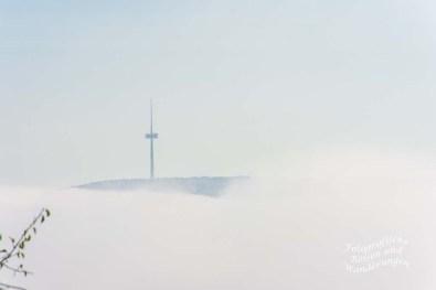 Der Kühkopfturm im Nebel