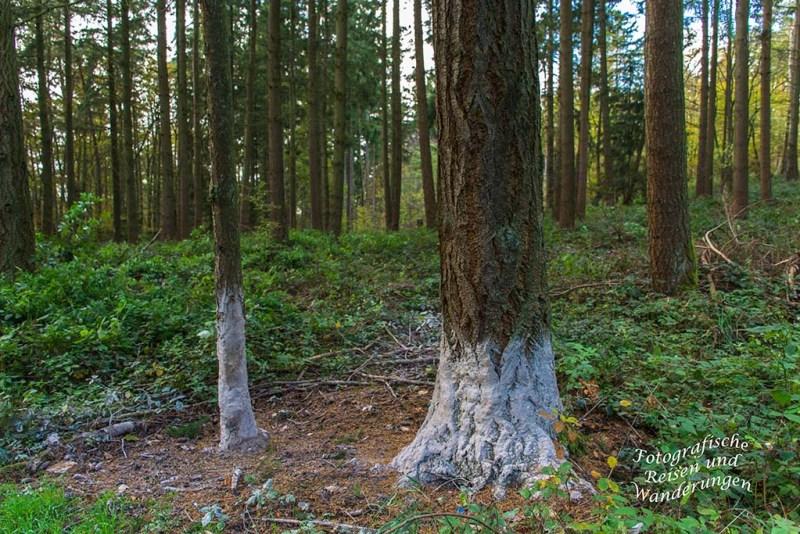 Wer hat dem Baum die Füße eingeschmiert?