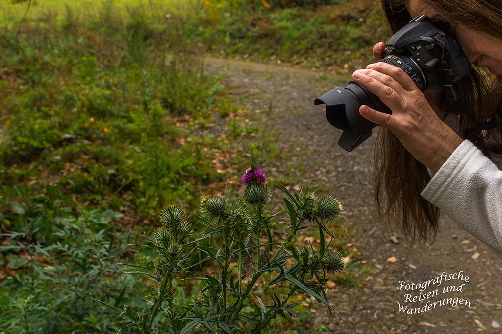 Gewöhnliche Kratzdistel mit Hummel drauf, Tanja fotografiert sie