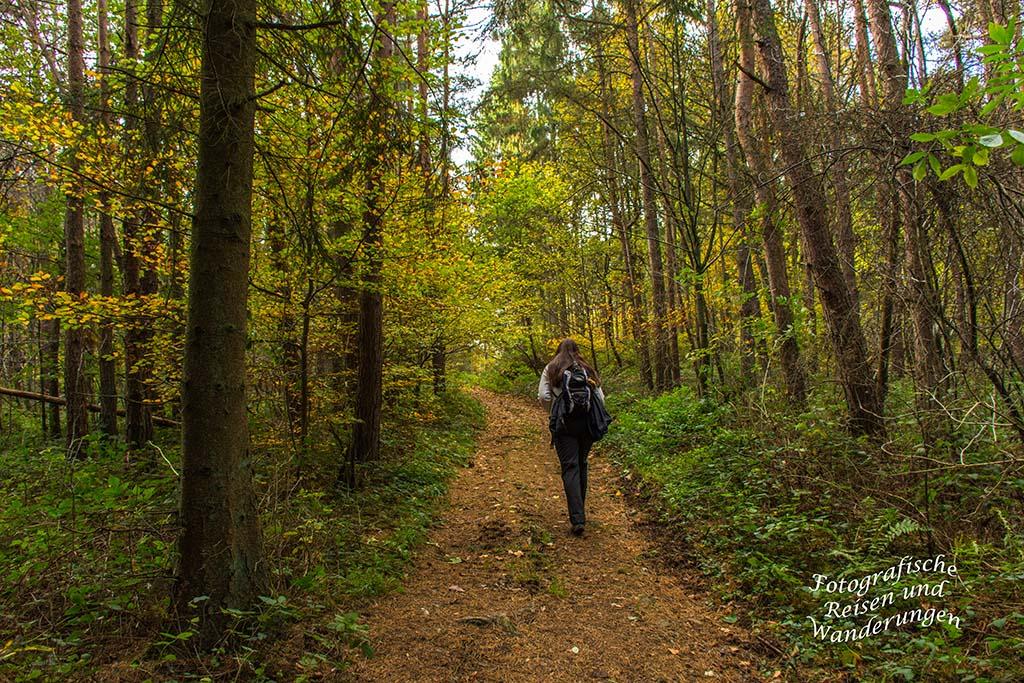 Herrliche Wege, unter dem bunten Blätterhimmel des Herbstes