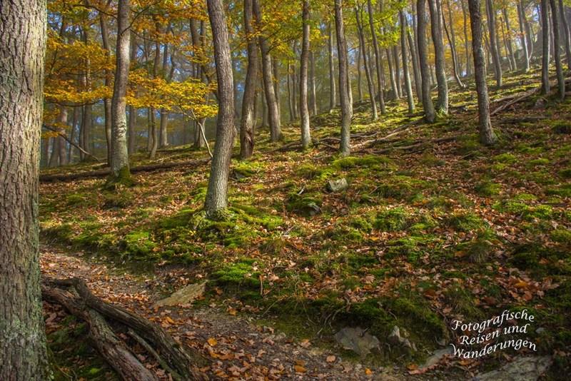 Schmaler Pfad im Herbstwald auf dem Mosel- Seitensprung Graf-Georg-Johannes Weg