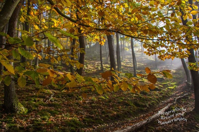 Bunte Blätterpracht im Herbstwald auf dem Mosel- Seitensprung Graf-Georg-Johannes Weg